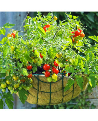 """MTB Garden Hanging Baskets for Plants 16"""" - Vintage Geo with Coco-Liner, Pack of 4, Hanging Planter Plant Hanger Hanging Flower Basket Chain Basket and Plant Growers for Home Balcony Patio Decoration"""