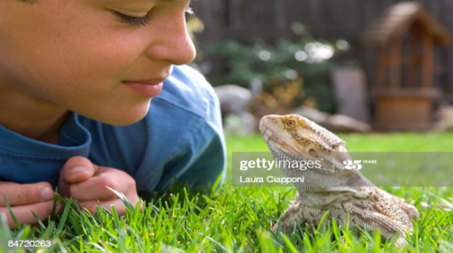 Making friends with lizard
