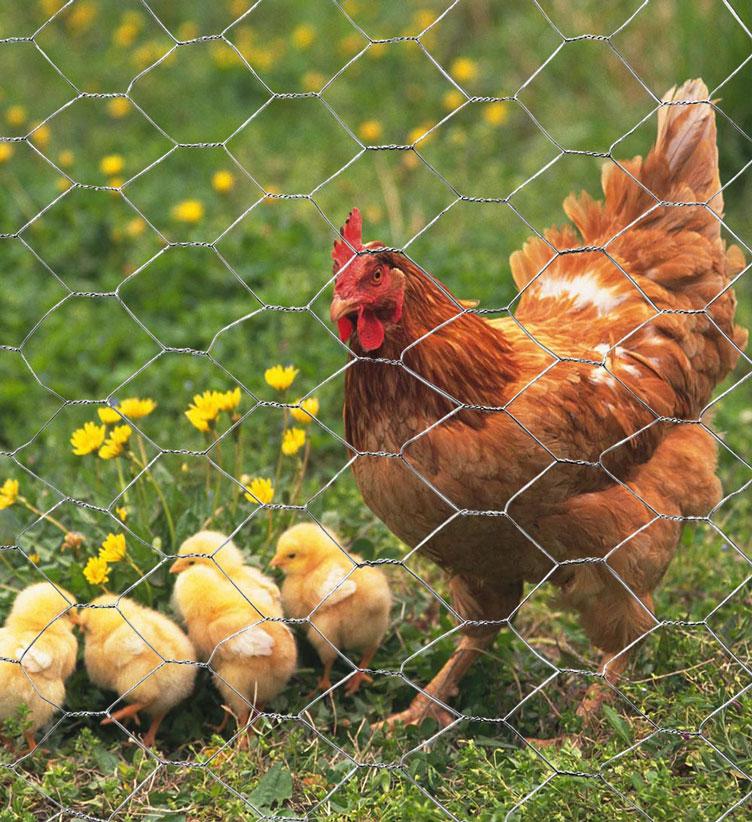 MTB 20GA Galvanized Hexagonal Poultry Netting Chicken Wire 60 inches x 50 feet x 1 inch Mesh